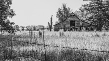 Old Wooden Barn In Overgrown Field BW