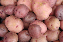 Close Up Full Frame View Of Red Potatoes Displayed For Sale At A Market Stand