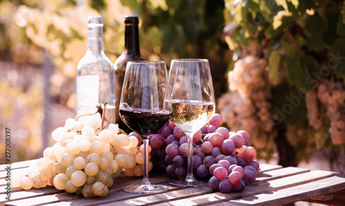 Acrylic Prints Wine glasses of red and white wine and ripe grapes on table in vineyard