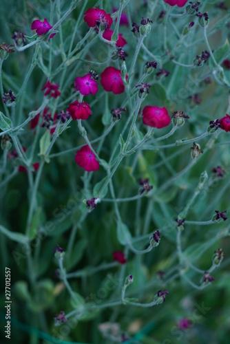 Montage in der Fensternische Darknightsky Pink green Flowers