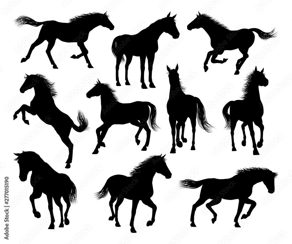 Zestaw szczegółowej grafiki sylwetki konia