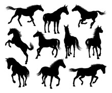 A Set Of Horse Animal Detailed...