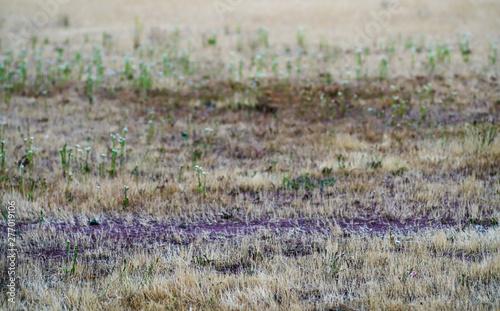 Montage in der Fensternische Darknightsky Landschafts Rasen Brachfläche