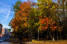 Entrance To The Golden Autumn, Smolensk