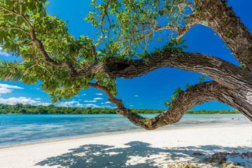 Palm trees on a tropical beach, Vanuatu, Erakor Island, Efate