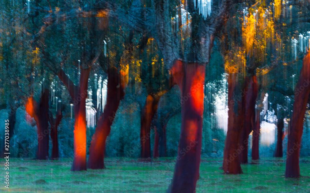 Fototapeta Cork Oak, Ambroz valley, Cáceres, Extremadura, Spain, Europe