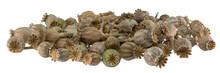 Ripe, Dry Poppy Seed Pods Pile...