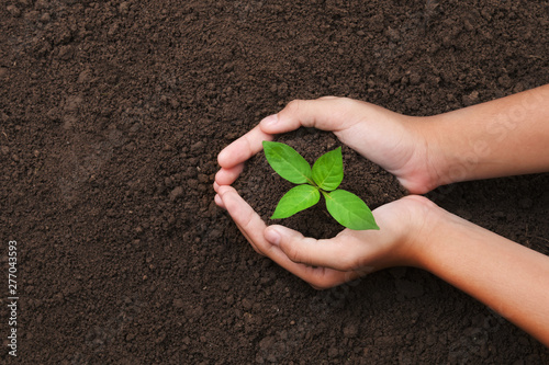 top view hand holding young tree on soil background for planting in garden Fototapete