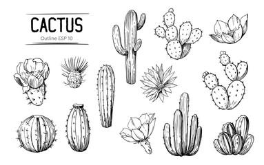Set kaktusa s cvijećem. Ručno nacrtana ilustracija pretvorena u vektor