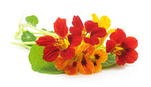 Bouquet Of Nasturtium On White...