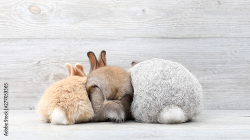 Photo  Lovely bunny easter rabbits on wooden background