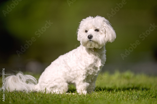 Slika na platnu Portrait of beautiful dog breeds