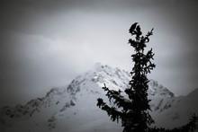Raben, Dohlen, Silhouette, Baum, Winter, Berge, Schnee