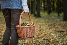 Woman Holding Wicker Basket With Mushroom In Autumn Forest