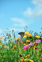 Butterfly Climbs On A Wildflower