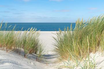 Dina s travom na plaži.
