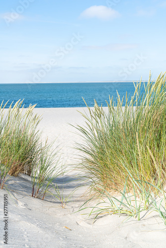 Poster Blanc Dune with beach grass.