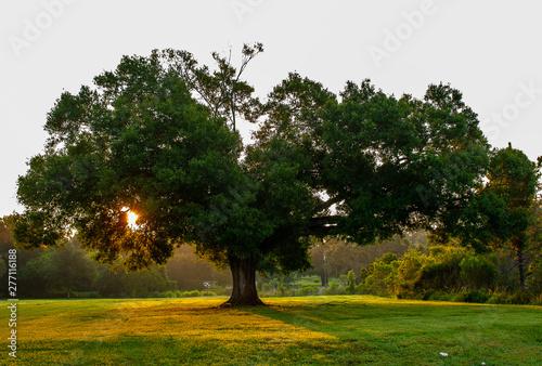 Sun shining through a tree in the park