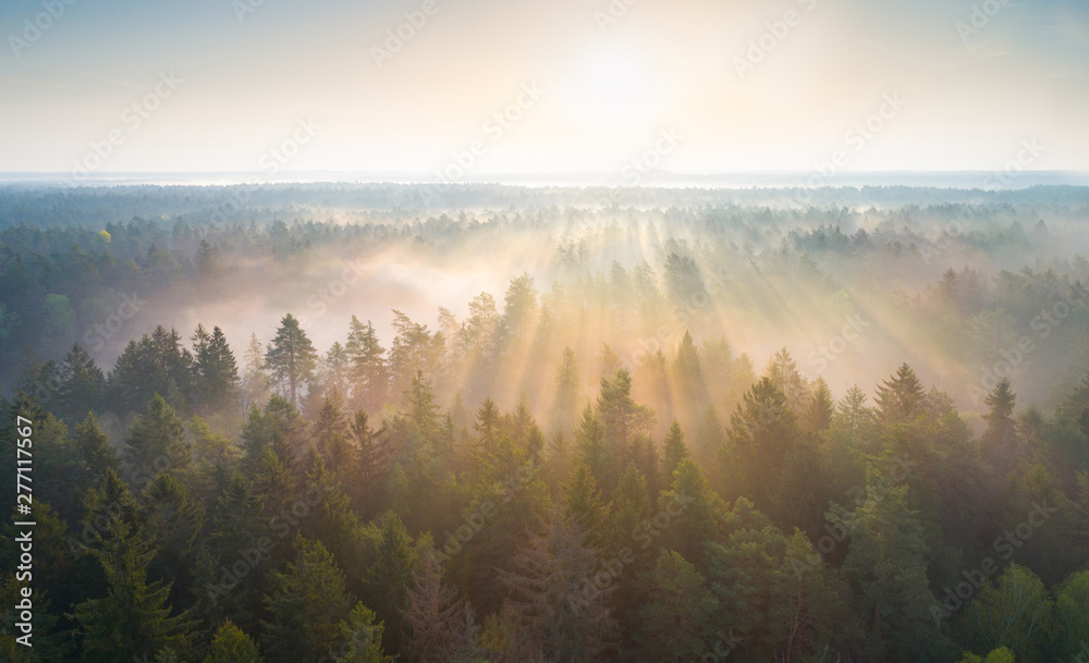 Fototapety, obrazy: Foggy morning in a forest