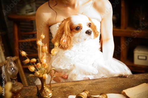Tablou Canvas ウェディングドレスを着たキャバリア