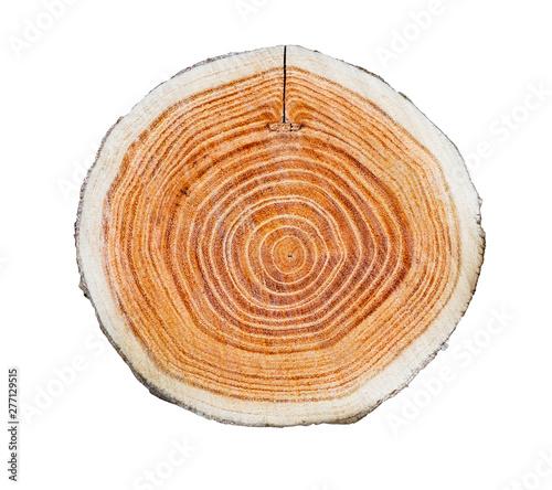 Fotografia  Tree trunk slice cut from the woods