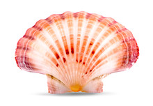 Sea Shell An Isolated On White Background