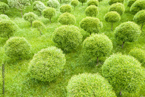 mata magnetyczna green trees growing in garden. top view of summer landscape