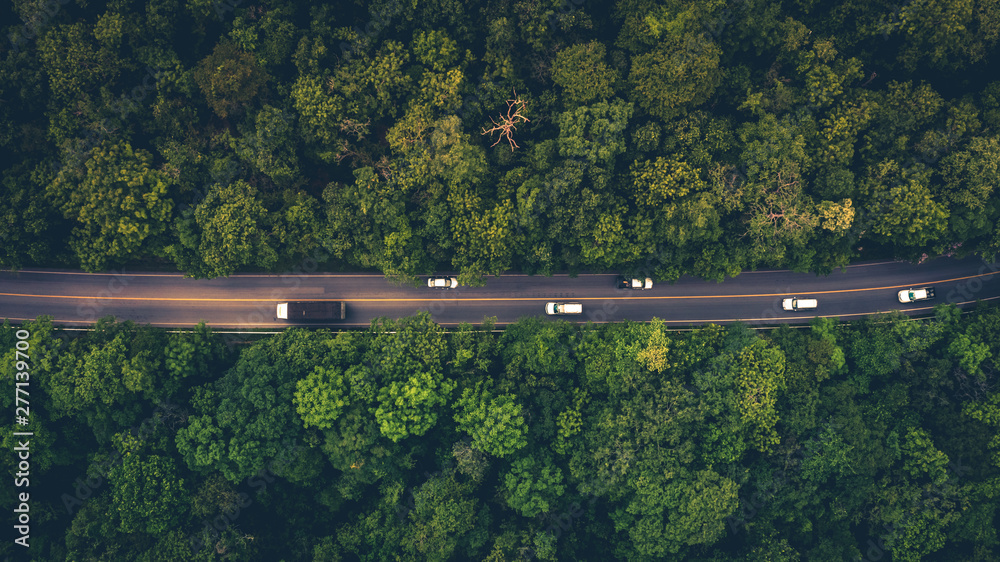 Fototapeta Forest Road, Aerial view over tropical tree forest with a road going through with car.