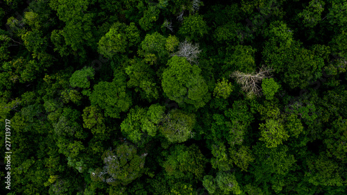 Background of forest, Aerial top view background forest, Texture of forest Canvas Print