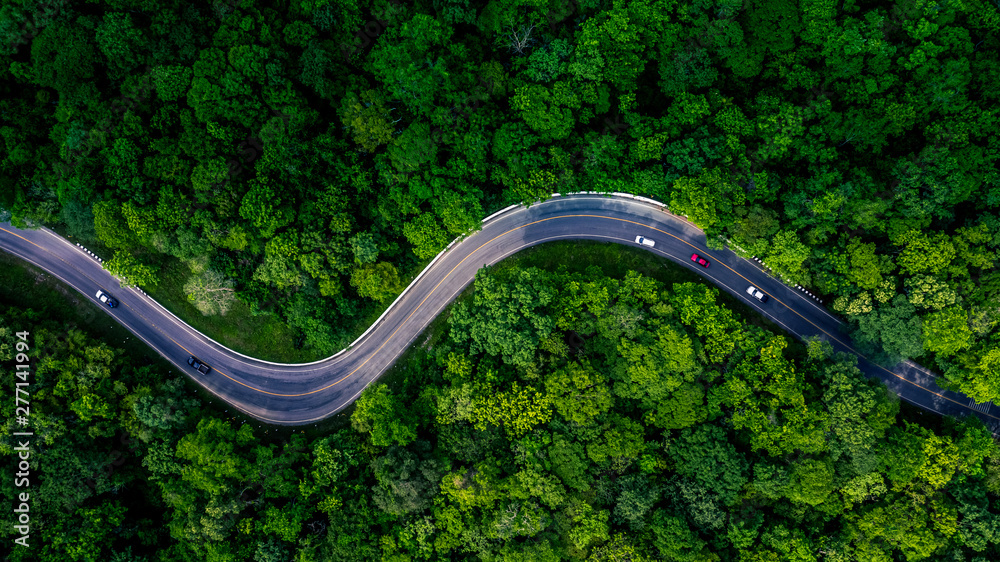 Fototapeta Forest Road view from above, Aerial view asphalt road in tropical tree forest with a road going through with car, Adventure in Asia background concept.