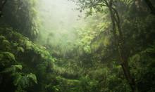 Regenwald Tropisch Nass Abente...