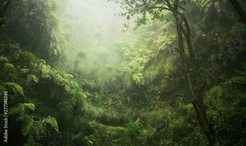 Fotografija Regenwald tropisch nass abenteuer