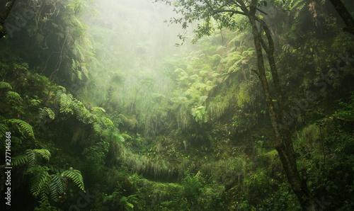 Regenwald tropisch nass abenteuer Wallpaper Mural
