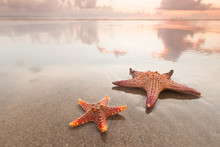 Two Starfish On Sea Beach At S...