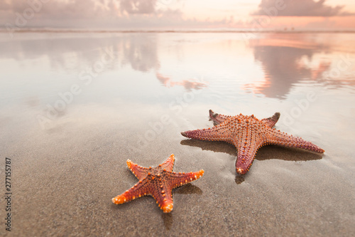 Fototapeta Two starfish on sea beach at sunset