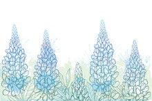 Field Of Outline Lupin Or Lupine Or Texas Bluebonnet Flower Bunch, Bud And Ornate Leaves In Pastel Blue And Green On The White Background.
