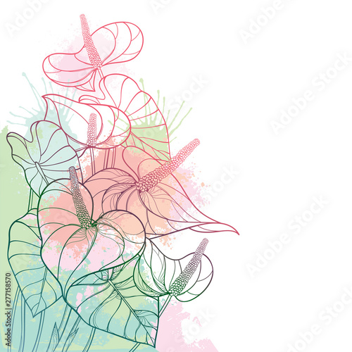 Corner bouquet of outline tropical plant Anthurium or Anturium flower bunch and leaves in pastel red and pink isolated on white background Wallpaper Mural
