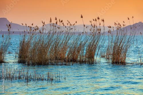 Fotografia The shore of Lake Balaton on the Tihany peninsula