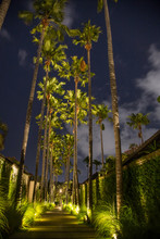 View On Tall Palm Trees During The Night