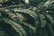 Jungle plants background (tropical leaves pattern). Tropical thickets and bushes in the jungle.