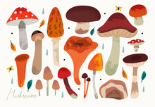 Autumn Mood. Hand Drawn Big Vector Set Of Various Types Of Mushrooms. Colored Trendy Illustration. Flat Design. Stamp Texture. All Elements Are Isolated