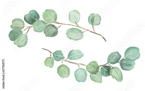 Watercolor illustration of eucalyptus twigs. Isolated Fototapeta