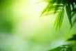 Leinwanddruck Bild - Closeup nature view of green leaf on blurred greenery background in garden with copy space for text using as summer background natural green plants landscape, ecology, fresh wallpaper concept.