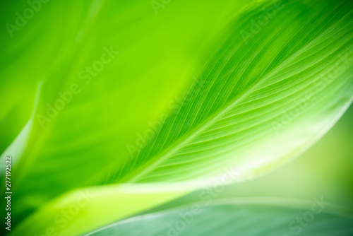 Closeup nature view of green leaf on blurred greenery background in garden with copy space for text using as summer background natural green plants landscape, ecology, fresh wallpaper concept. - 277192522