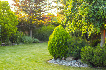 ogród przydomowy z ozdobnymi drzewami i roślinami
