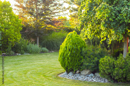 Obraz home garden with decorative trees and plants - fototapety do salonu