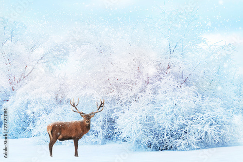 Noble deer on the background of white trees in the snow in the forest. Beautiful winter landscape. Christmas background. Winter christmas wonderland.