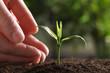 Leinwandbild Motiv Woman protecting young green seedling in soil against blurred background, closeup