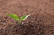 Leinwandbild Motiv Young plant in fertile soil, space for text. Gardening time