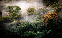 Cloud Forest At San Gerardo De Dota, Costa Rica In The Talamanca Mountain Range. Los Quetzales National Park.